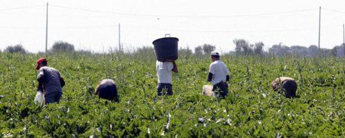 AOI e Link2007: immediata regolarizzazione dei migranti, importante misura in tempo di emergenza codiv-19